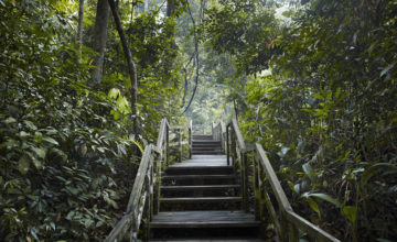 midwood-condo-bukit-timah-nature-reserve-singapore
